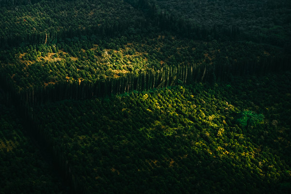 Vibrant Forest in Hilo, Big Island, Hawaii