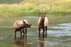 Madison River - Yellowstone National Park - 2013