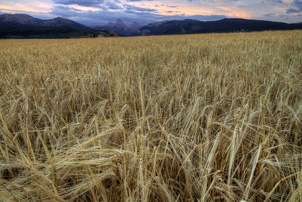Sunset in Teton Valley, Idaho.  It's almost time for harvest in the barley fields.