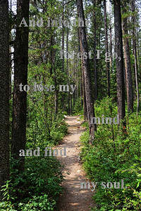 And into the forest I go, to lose my mind and find my soul.
