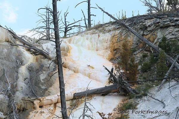 Near Mammoth Hot Springs - Yellowstone National Park