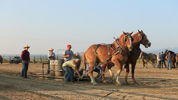 Horse Pull at the Teton County Fair in Driggs, Idaho.  By the time the night was over the heavyweights were pulling over 9,000 pounds.  The strength and size of these horses are just incredible.
