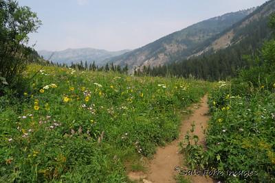 Wildflowers along the trail in Alaska Basin - Jedediah Smith Wilderness Area - Wyoming