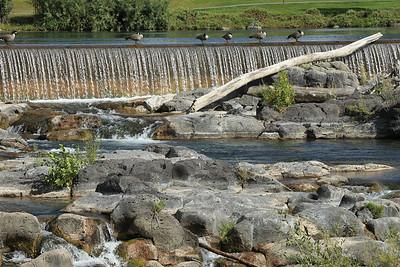 Snake River in Idaho Falls, ID
