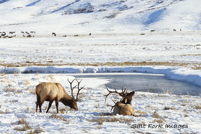 Can't.  Quite.   Reach.   the.   Itch! National Elk Refuge - Jackson Hole, Wyoming