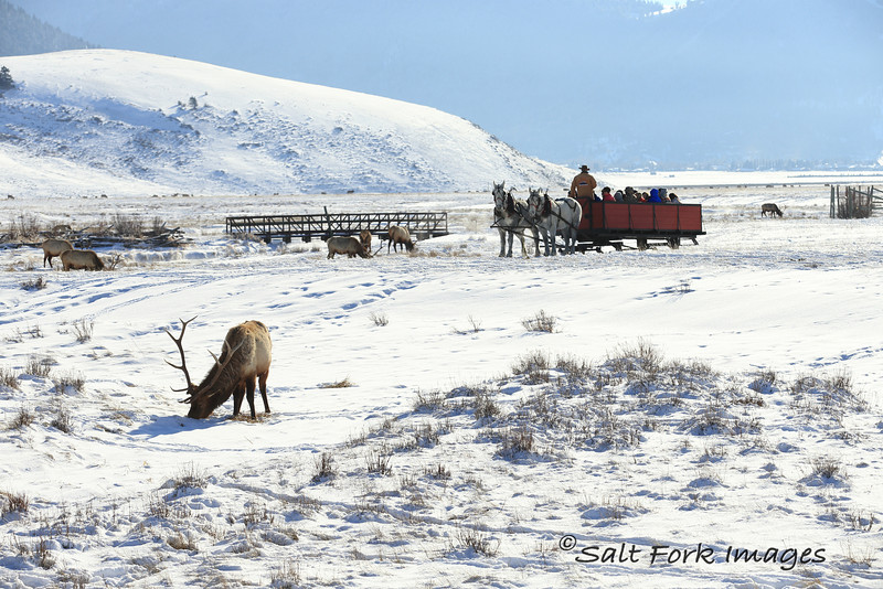 National Elk Refuge - Jackson Hole, Wyoming