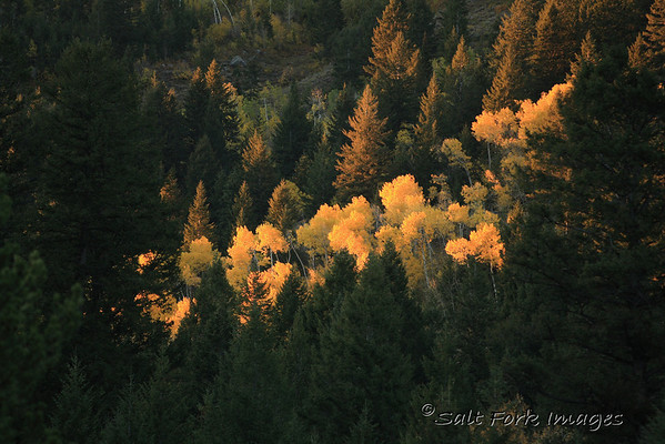 A splash of color in Teton Canyon - Wyoming