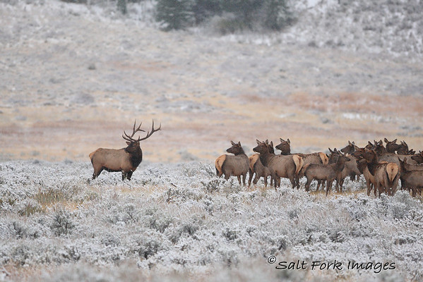 The Guardian - Grand Teton National Park - Wyoming