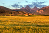 Purple Mountain Majesty and Amber Waves of Grain - Alta, Wyoming
