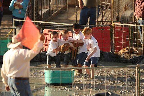 Pig Wrestling at the Teton County (Wyoming) Fair - 2012