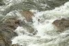 Churning water in the Firehole River - YNP.