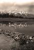 Schwabacher's Landing, GTNP, Wyoming.