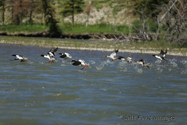 Cleared for Takeoff - Snake River - Wyoming