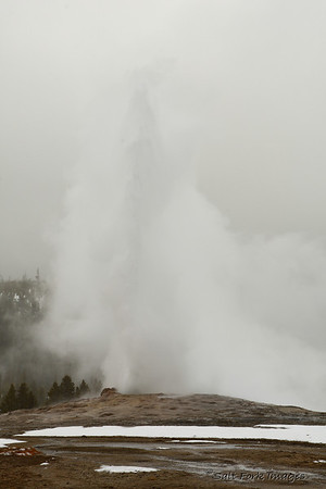 Old Faithful on a dreary day.  It was about 15 or 20 degrees with 40 to 50 mph winds.