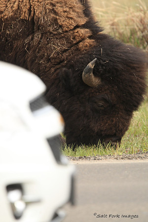 Bison vs. Chevy.  On your mark.....