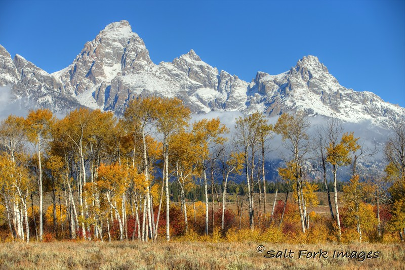 Aspens and Tetons on a Bluebird Morning - Grand Teton National Park, Wyoming