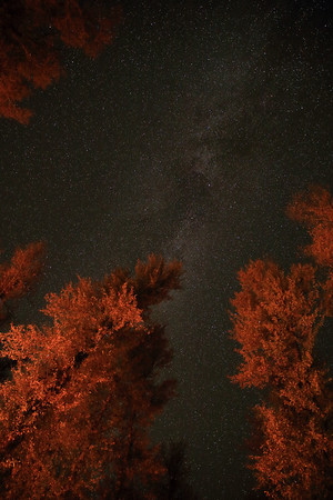 The Milky Way through the campfire-lit cottonwoods of Gros Ventre Campground - Grand Teton National Park - Wyoming