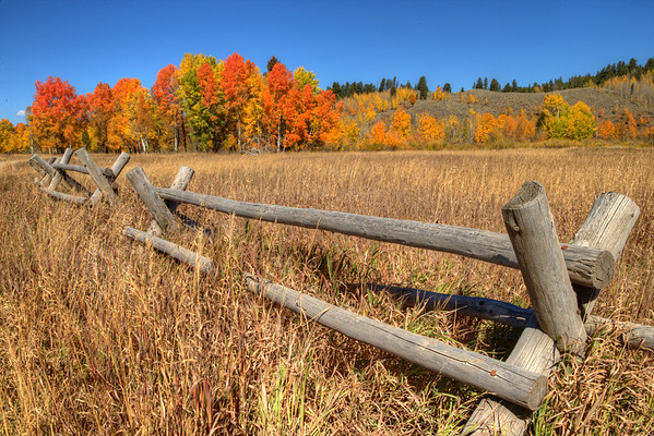 Fall color along the backwaters of the Snake River in Wyoming