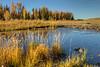 Lower Schwabacher's Landing - Grand Teton National Park