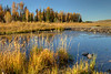 Lower Schwabacher's Landing - Grand Teton National Park