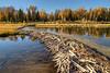 Beaver Dam at Lower Schwabacher's Landing - Grand Teton National Park - Wyoming