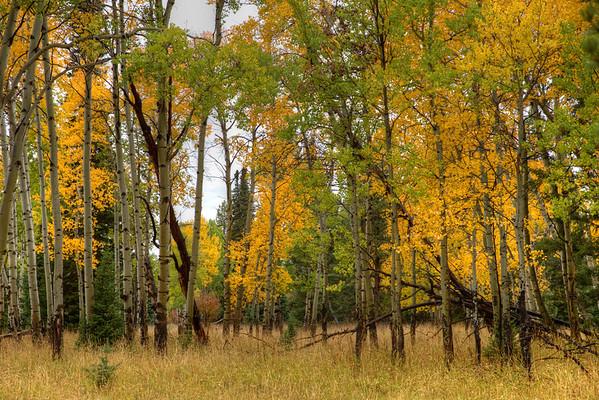 Fall color along Moose-Wilson Road - GTNP - Jackson Hole, Wyoming