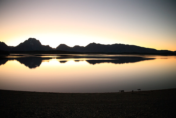 Jackson Lake Sunset - Check out the deer taking a stroll!