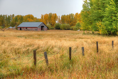 Fall color just outside Driggs, Idaho