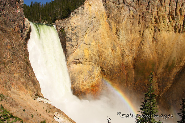 Lower Falls on the Yellowstone River - taken from Uncle Tom's Trail.