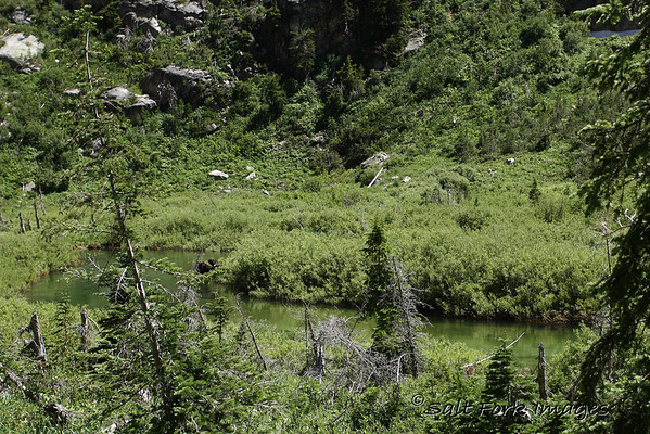 Can you see the bull moose?  Look at the thumbnail for a hint.