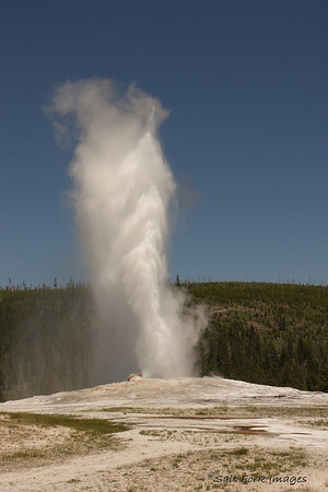 Old Faithful - of course!