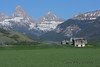 It's a pretty time in Teton Valley.  Snow is melting and the barley fields are lush.
