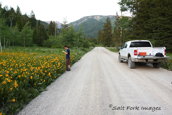 Matthew enjoys the wildflowers in Teton Canyon.