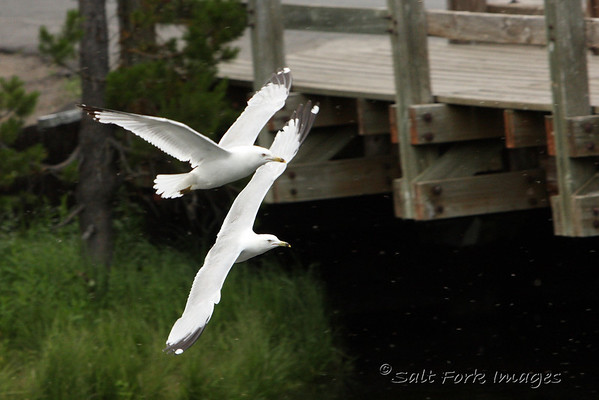 IMG_0841a