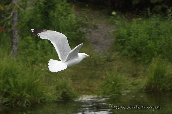 IMG_0796a