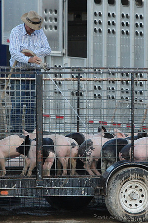 Somebody's got to hose off the pigs....