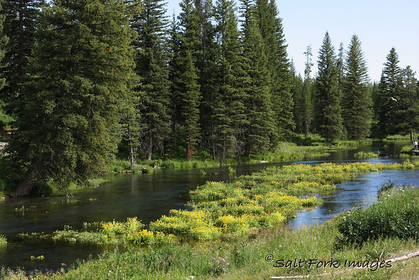 This is a shot at Big Springs near Island Park, Idaho.  The spring here is the source for the Henry's Fork of the Snake River.