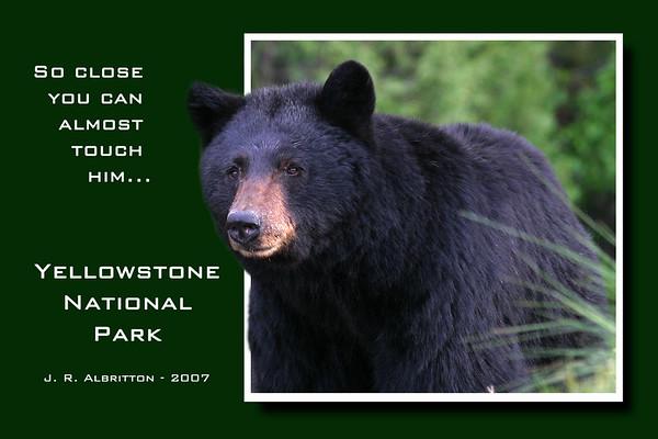 New Bear Poster