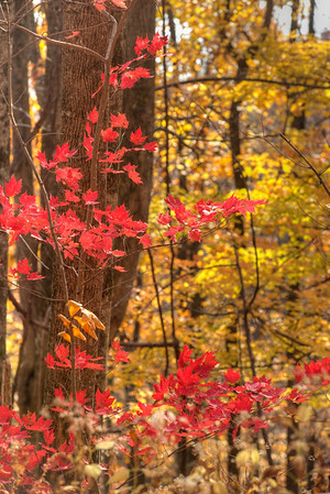 Fall color near the NC / SC border - Nantahala National Forest