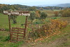 On the farm of San Donato - near San Gimignano, Italy