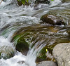 Stream close-up