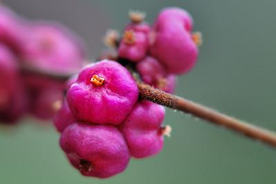 Berries October 39, 2009