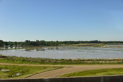 Rice Field; Roadside between Lake Charles and Avery Island
