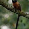 Ecuador, El Oriente, Yasuni National Park, Napo Wildlife Center