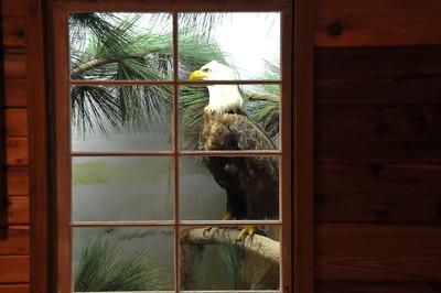 Merritt Island National Wildlife Refuge Exhibit