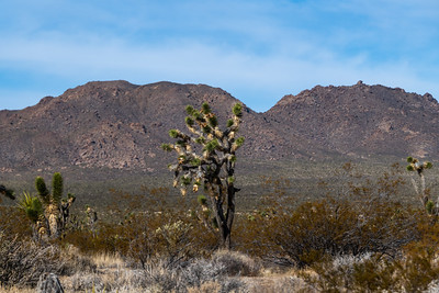 Roadside to Mojave Desert