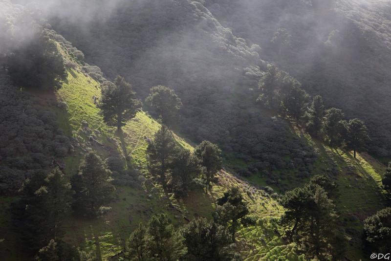 Spain, Gran Canaria: View from Camino de Los Pinos de Gáldar over steep grazing grounds.
