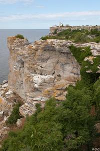 Sweden,Gotland, Stora Karlsö