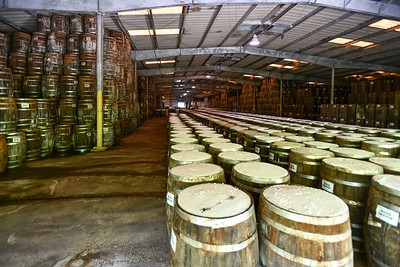 Pepper Mash is stored in Barrels for 3 years; Salt helps seal the top; TABASCO® Factory Tour and Museum