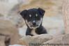 Egyptian Puppy<br /> Saqqara, Egypt